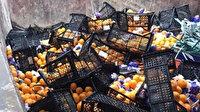 İstanbul'dan Rusya'ya gönderilen mandalinalar yanlış etiket kurbanı oldu: 21 ton mandalina imha edildi