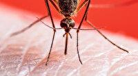Tekirdağ'da sivrisinek ısırması sonucu virüs kapan kadın öldü: Kırsala çıkacak kişiler uzun kollu giyinsin