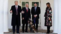 ABD Başkanı Trump Bağdadi operasyonunda görevli köpeğe plaket ve madalya verdi