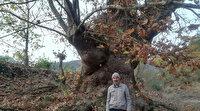 Bu ağacı görenler şaşırıyor: Bin yaşında olduğu tahmin ediliyor