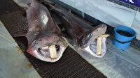 Balık avlarken 2 köpek balığı çıktı: İlgi odağı oldu