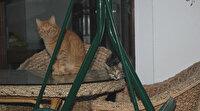 Ordu'da şaşkınlık veren olay: Terör estiren sokak kedisi 4 kişiyi hastanelik etti