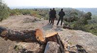 Mersin'de kaçak ağaç kesimine 1 gözaltı: 1511 ağacın diplerinden kesilerek, yerinde bırakıldığı belirlendi