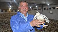 Emekli polisin yetiştirdiği et tavukları Arap sofralarını süslüyor: Güzel paralar kazanıyorum