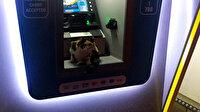 Sokak kedisi fırtınadan korunmak için ATM'ye sığındı