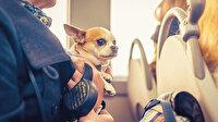 Evcil hayvanlar otobüse binecek