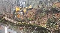 Rize'de heyelan nedeniyle kopan ağaçlar yolu kapattı