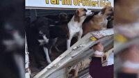 İYİ Partili Demre Belediyesi köpekleri ölüme terk etti