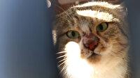Nesli tükenmekte olan yaban kedisi doğaya bırakıldı