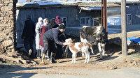 Veteriner hekimler deprem bölgesindeki hayvanları ücretsiz tedavi edecek
