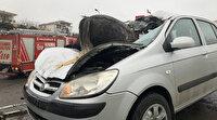 İstanbul'da feci kaza: 3 at telef oldu