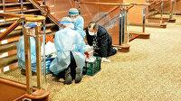 Japonya'da karantinaya alınan yolcu gemisinde 10 kişide koronavirüsü saptandı