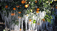 Meteorolojiden Antalya için zirai don uyarısı yapıldı