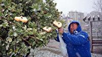 Yardımsever ayakkabı boyacısı kuşlar için ağaçlara ekmek asıyor