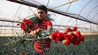 20 günde 39 milyon liralık çiçek ihraç edildi: Türkiye'nin pazardaki önü açık