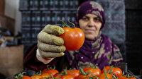 Türk domatesi Rusya vizesini kaptı: İhracat yeniden başlıyor