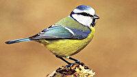 Tarihimiz kuşlarla ortak