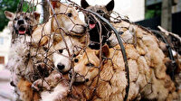 Çinli yemek şirketi saçmaladı: Koronavirüse karşı insanları köpek eti yemeye çağırdı