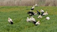 Türkiye'nin tek Avrupa Leylek Köyü:  Kuş cenneti olacağını düşünüyoruz