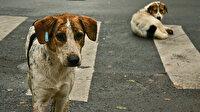 İçişleri Bakanlığı sokak hayvanlarına sahip çıktı