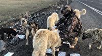 Polisler kumanyasını aç kalan sokak köpekleri ile paylaştı