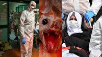 Bilim insanları açıkladı: Koronavirüs salgınına yol açan şey