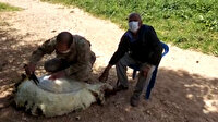 Jandarma ekipleri gönülleri fethetmeye devam ediyor: Yalnız yaşayan yaşlı adamın koyunlarını kırktılar
