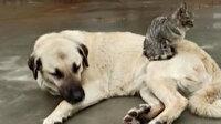 Köpek ve kedinin kıskandıran dostluğu