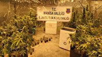 Manisa'da evinde kurduğu serada uyuşturucu yetiştiren zanlı gözaltına alındı