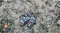 Antalya'da vahşet: Kaplumbağaları başlarına vurup, kabuklarını kırarak öldürdüler