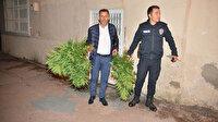 Cinayet ihbarına giden polis evde saksılarda uyuşturucu yetiştirildiğini gördü