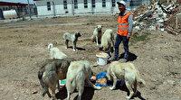 İnşaat işçisi genç korona günlerinde sokak hayvanlarının can dostu oldu