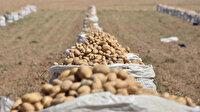 Patates ithalatına gözetim kararı