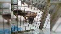 Sıkıştığı yerden kurtarılan yavru köpeğin annesiyle buluşma anı duygulandırdı