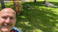 Bakan Soylu'nun hayvan sevgisi: Paylaşımı binlerce beğeni aldı