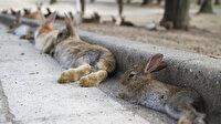 ABD'de yeni ölümcül salgın: Tavşanlar arasında hızla yayılıyor