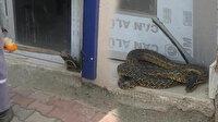 Bursa'yı yılanlar bastı: Vatandaşları tedirgin ediyor