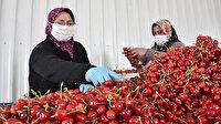 Evde kalan vatandaşlara meyve yetişmiyor:  Üreticiler talebi karşılamak için fazla mesai yapıyor
