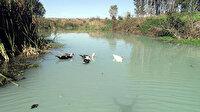 Kırklareli Valiliği: İnece Belediyesi arıtma tesisinden Teke Deresi'ne arıtılmadan, atık su bırakıldığı tespit edildi
