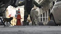 Bomba uzmanı ihbara gitti başıboş sokak köpekleri ile boğuştu