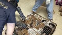 Çinliler akıllanmıyor: 'Yemek' için tutulan 700 kedi kurtarıldı