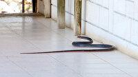 Zehirli yılanlar gece çıkıyor: Sahillere ayakkabısız çıkmayın