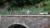 Altı tünel üstü tarla: Artvin'deki bu tarla görenleri şaşırtıyor