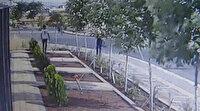 Diyarbakır'da bir garip hırsızlık: Yıllarca gözü gibi baktığı ağaçları çalındı