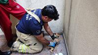 Sultangazi'de su giderine sıkışan kediyi itfaiye ekipleri kurtardı
