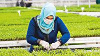Konya tarımı Meram'dan geçecek