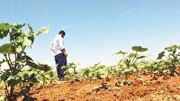 Şanlıurfa'da topraklara nöbetleşe ekim molası