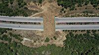 """Yaban hayvanları korumak için İzmir-Çeşme yoluna yapılan """"ekolojik köprü"""" tamamlandı"""