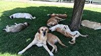 Köpekleri görüntülemek isterken hayatının şokunu yaşadı