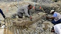 70 yıl önce Arjantin'de bulunmuştu: Balık fosilinin 70 milyon yıllık olduğu ortaya çıktı